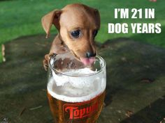 Beer Loves Dog Years...