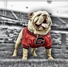 Go Dawgs!!!!