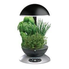 Countertop Herb Gardening