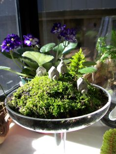 City on the Hill Terrarium | Flickr - Photo Sharing!