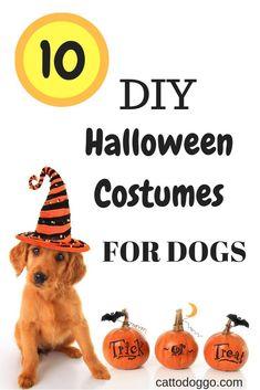 DIY Halloween Costume Tutorials for Your Dog Cute Halloween Food, Puppy Halloween Costumes, Original Halloween Costumes, Pet Costumes, Dog Halloween, Halloween Ideas, Dog Hotel, Dog Facts, Dog Activities
