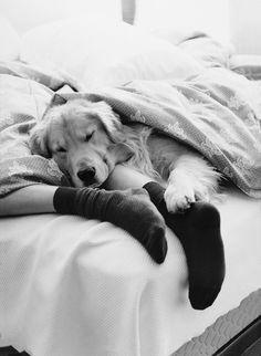 Cão dormindo
