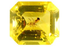 For 30 million years this ant has been sealed in this amber. Someone has carefully cut and polished it to gemstone quality!