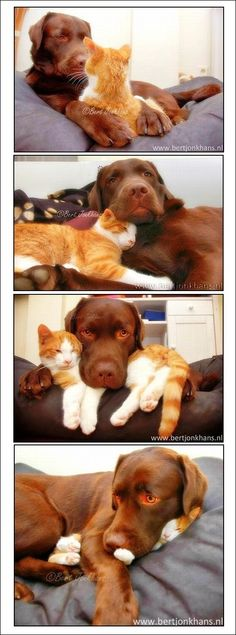 The relationship between the dog and kitten is beautiful. Happy Animals, Animals And Pets, Funny Animals, Cute Animals, Baby Cats, Cats And Kittens, Cute Cats, Funny Cats, Cute Animal Pictures