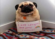 I eat crayons and poop rainbows: more funny pictures @ http://www.fartinvite.com/