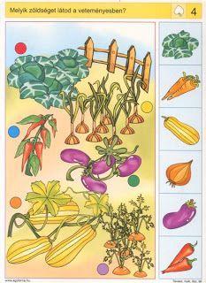 Logiko - zelenina