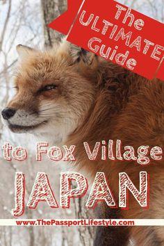A must see bucket list item, learn how to travel to Fox Village in Japan   Japan Travel Tips via www.thepassportlifestyle.com/fox-village-japan Kawarago-11-3 Fukuokayatsumiya, Shiroishi, Miyagi Prefecture 989-0733