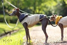 Hydrangea pile sleevesless / Purple in IGGYplus italian greyhound clothes Silly Dogs, Cute Dogs, Italian Greyhound Clothes, Online Pet Store, Dog Shop, Grey Hound Dog, Dogs And Puppies, Doggies, Dog Coats