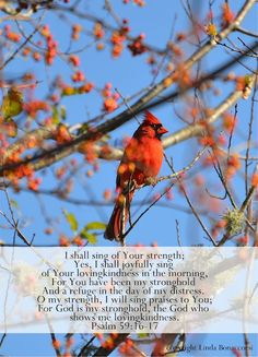 Psalm 59:16-17...I shall sing of Your strength....