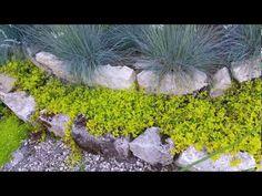 Ogród czerwiec 2017 nazwy kwiatów i krzewów - YouTube Youtube, World, Plants, The World, Plant, Youtubers, Youtube Movies, Planets