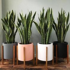 Easy and Fun Tips for Designing Your Indoor Garden living room Best Picture For house plants decor living room For Your Taste You are looking for something, and it is going to tell you exactly what yo Best Indoor Plants, Cool Plants, Green Plants, Pots For Plants, Indoor Plant Decor, Indoor Flower Pots, Indoor Cactus, Sun Plants, Indoor Planters