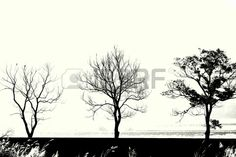 3 trees in a row on dike, black  white silhouette