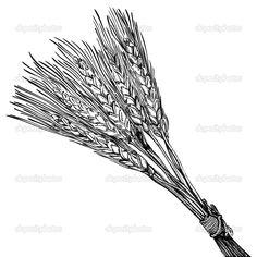 depositphotos_26993805-Engraving-of-ripe-wheat.jpg (1024×1024)