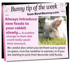 Bunny tip of the week - introduce new foods slowly. www.best4bunny.com