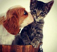 Puppy smoochers!