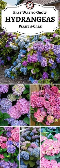 Hydrangea TOP 10 Tips on How to Plant Grow & Care 10 tips for hydrangeas The post Hydrangea TOP 10 Tips on How to Plant Grow & Care appeared first on Garden Easy. Garden Landscaping, Garden Shrubs, Outdoor Gardens, Shade Plants, Flower Garden, Hydrangea Care, Planting Hydrangeas, Plants, Planting Flowers