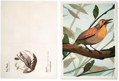 Illustrations of Brazilian Birds – Fubiz Media