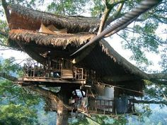 amazing tree house with thatched roof