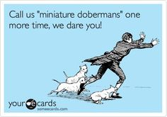 That is so on the money!! Miniature Pinschers! (Min Pin's) not related to the Doby