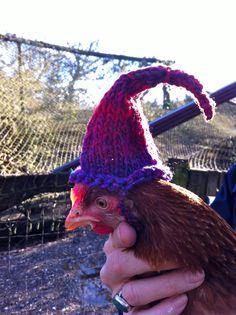 chicken hats