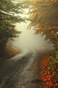 Autumn and Mist Together
