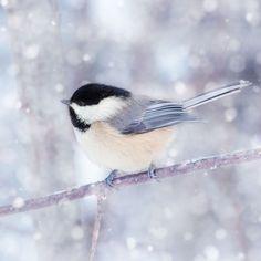 Allison Trentelman's Birds in Winter - Yankee Magazine