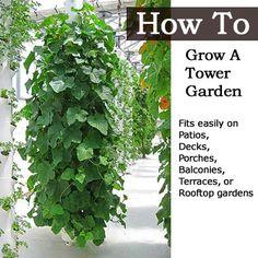 How To Grow A Tower Garden