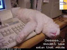 Humorous, Funny and Cute Animal Photos - It is our hope that this collection of humor will help make us laugh at ourselves, and hopefully live a more compassionate cruelty-free lifestyle. Funny Animal Pictures, Funny Animals, Cute Animals, Pet Pictures, Crazy Cat Lady, Crazy Cats, Cat Flea Collar, Animal Gato, Computer Humor