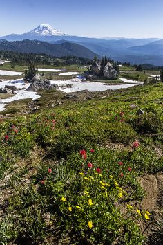 Wildflowers of the Goat Rocks Wilderness