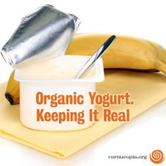 Did you know conventional yogurt is produced with milk from cows that are nearly always confined and unable to graze on pasture, and given a feed containing GMO grains. Learn more about conventional vs. organic yogurt here: http://www.cornucopia.org/2014/04/leaving-sour-taste-conventional-yogurt-masquerades-health-food-organic-keeps-real #yogurt #dairy #GMO #organic #food