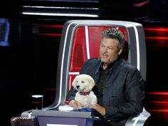 Blake Shelton uses a puppy in 'The Voice' season 18 premiere. Old Singers, Country Music Singers, Blake Shelton The Voice, Gwen Stefani And Blake, Matchbox Twenty, Puppy Names, Sundance Film, Sam Smith, Nick Jonas