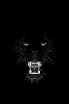 I may have already pinned this, but I couldn't pass this picture by. What a stunning shot! Love this Black Panther . Beautiful Cats, Animals Beautiful, Big Cats, Cats And Kittens, Chat Lion, Animals And Pets, Cute Animals, Gato Grande, Photo Animaliere