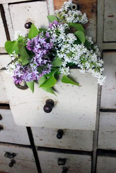 Old dresser on front porch Use plants that repel Mosquitos and insects Lavender Cottage, Mosquito Repelling Plants, Great Presentations, Bohemian House, Old Dressers, All Things Purple, Pretty Flowers, Flower Arrangements, Floral Wreath