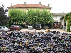 """Le Domaine Sambin #domainesambin #valc est un domaine viticole familial à 15 km au sud de Macon (france). Nos vignes sont sur les fameux Crus """"Moulin-à-Vent"""" et """"Fleurie"""" #Beaujolais Venez-nous voir en cave pour déguster et comprendre les différents millésimes sur 10 ans de nos Crus."""