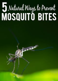 Natural Prevention for Mosquito Bites - Have more mosquito-free fun outside this Summer with these 5 simple and natural ways to prevent mosquito bites that are also totally safe for kids and pets. Parenting Tips | DIY