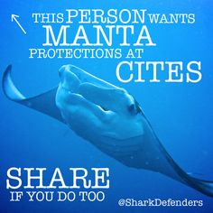 Support the protection of Manta Rays at CITES in 2013.  Share, Tweet, Like, and Pin this photo!