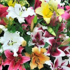 Oriental Lilies Valentines Assorted Colors 20 Flowers 24 | GlobalRose.com