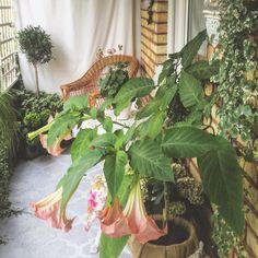Blomstrande balkong