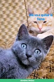 Wine Xd Gatos Buscar Con Google Gatos Animales