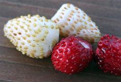 How to Save Alpine Strawberry Seeds