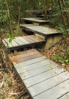 pasarela en el bosque Khao Yai