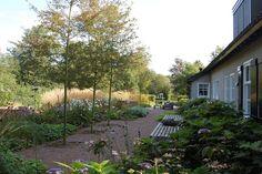 Boerderijtuinen Om, Plants, Flora, Plant