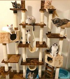 Superb floor to ceiling cat tower featuring multi-level sisal scratching posts providing an outlet for climbing and scratching. Cat Towers, Scratching Post, Sisal, Cats And Kittens, Ceiling, Flooring, Cat Stuff, Posts, Ceilings