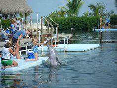 Photo by Karen Williams. #flkeys #floriakeys #photoadventure #dolphinresearchcenter #dolphinpainting #lovedolphins #funwithdolphins