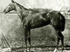 In 1880, Hindoo, a champion thoroughbred of Dwyer Stables in Brooklyn, raced on Avenue X in Sheepshead Bay.
