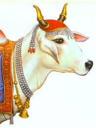 Image result for hindu-sacred-cow