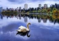 I do remember this shot – it was a lone swan on a lake in the famous Stanley Park of Vancouver. I shot this when I went up there to speak at the Canadian Cato Institute to a bunch of Libertarians about online gaming economies being their last great hope. Stanley Park Vancouver, Vancouver Photos, Downtown Vancouver, North Vancouver, Swan Wallpaper, Animal Wallpaper, Vancouver Wallpaper, Swan Float, Mute Swan