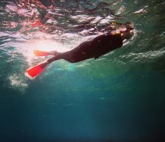#snorqueling #greatbarrierreef #queensland #australia #ocean #swimming #exploringtheocean by morganeborzee http://ift.tt/1UokkV2