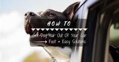 How To Get Dog Hair Out Of Your Car – Fast & Easy Solutions