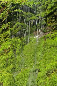 Seasonal waterfall in Big Basin State Park after many weeks of heavy rain.  Santa Cruz Mountains, California